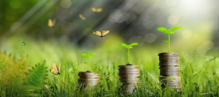 Money Plants Growth Coins Finance  - Orlandow / Pixabay